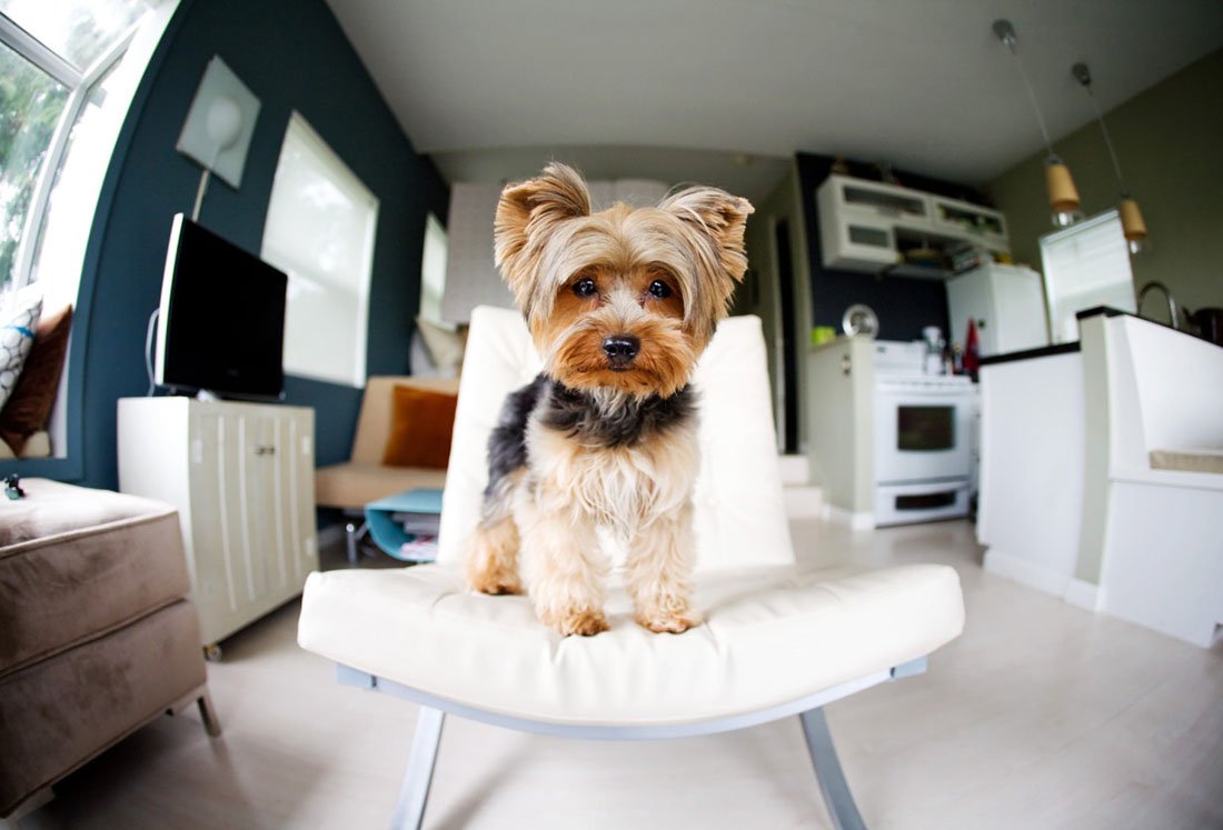 Das Beste Apartment Magz Pet Policy What You Need To Know In Diesem Monat