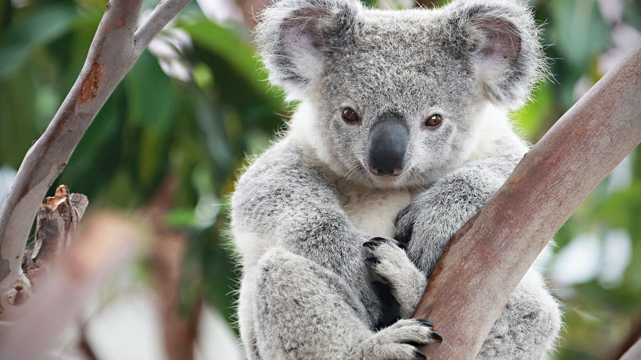 What Humans, Bees And Koala Bears Have In Common Is Due To ...