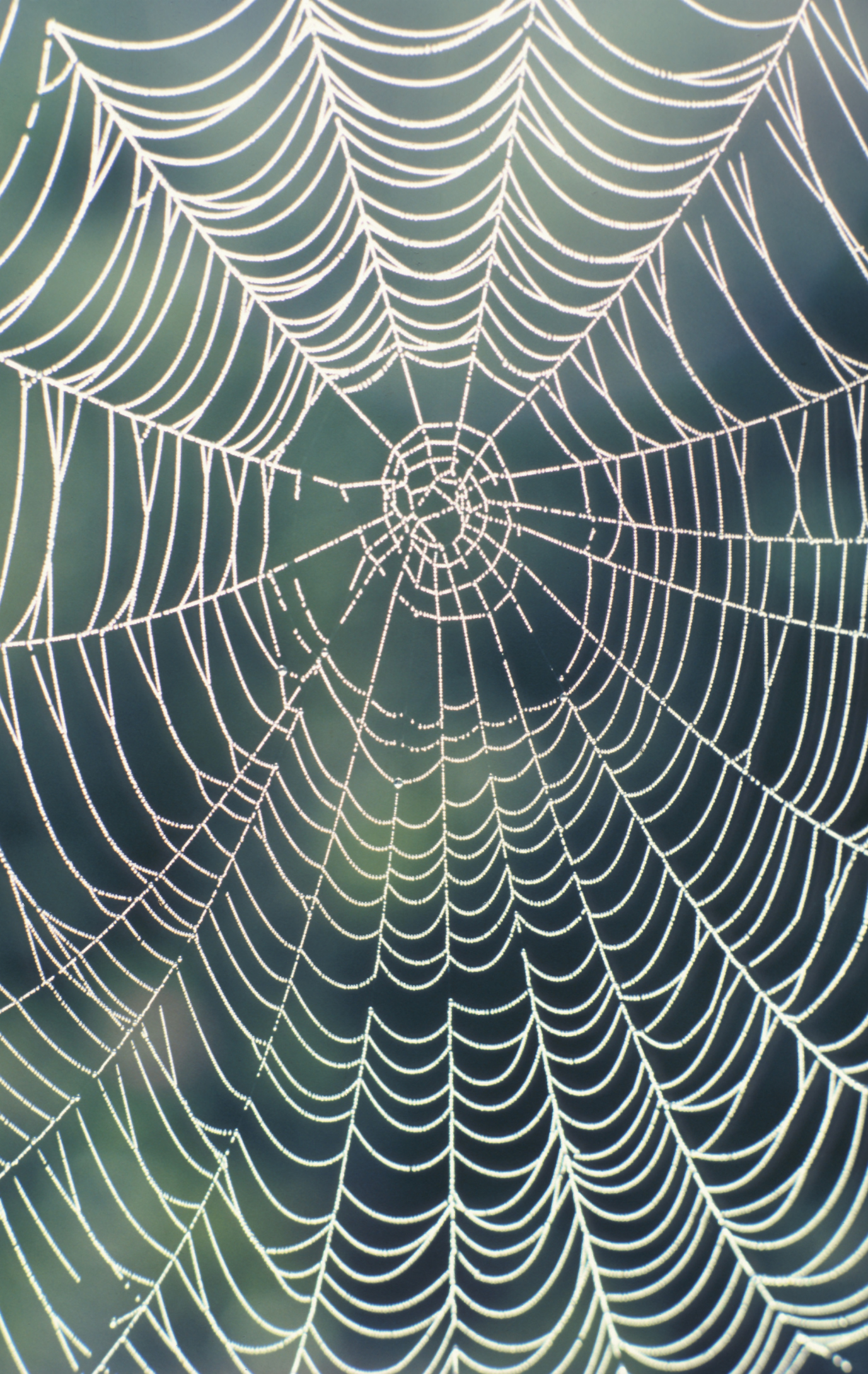 How To Decorate With Fake Spider Webbing Ehow
