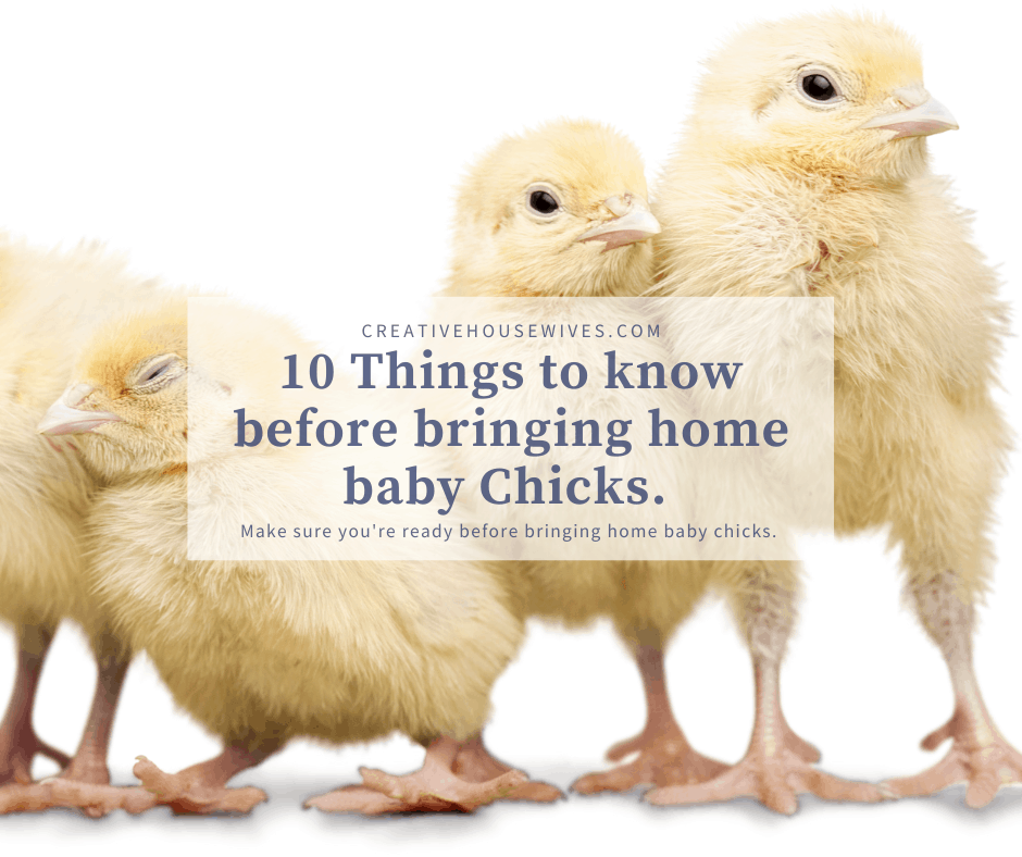 10 things you need to know before bringing home baby chicks