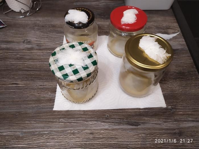 Астық мицкелий саңырауқұлақтарын өсіріңіз, олардың өсуі, терезедегі бақ, бақшасы, мицелий, мицлекс, үйге арналған идея, ұзақ