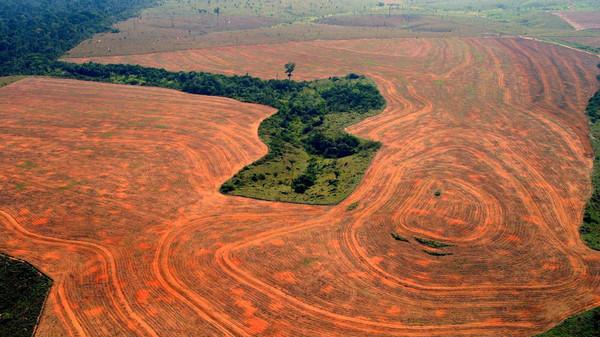 amazon rainforest deforestation - 1280×720