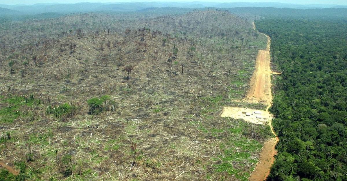 amazon rainforest deforestation - 750×500