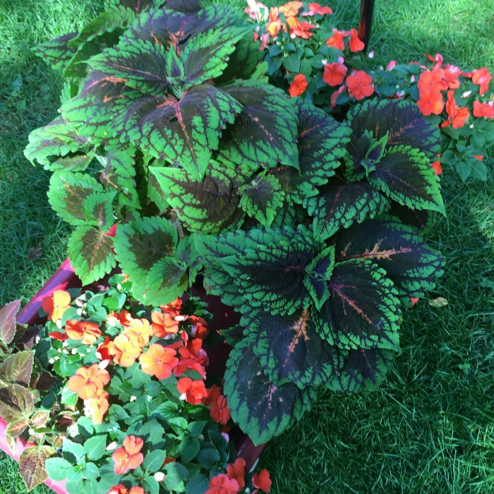 Shade Loving Plants and Flowers   Connecticut in Style Shade Loving Plants and Flowers