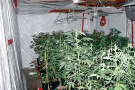 Meilleures Idées de Cuisine » faire pousser cannabis interieur sans ...