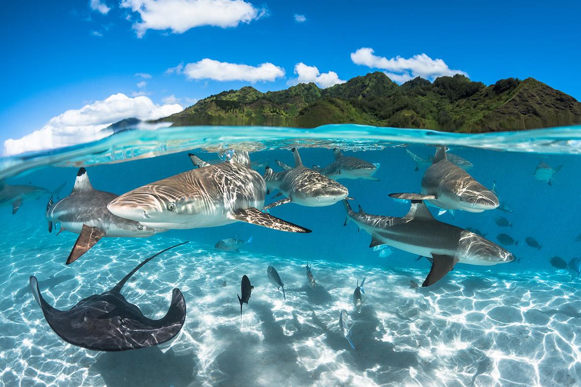 Half Beach Underwater Background Island