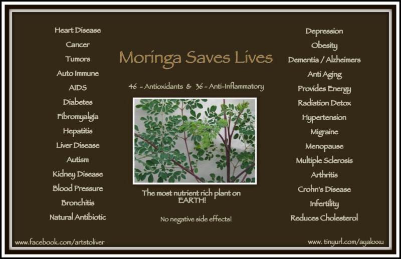 Moringa Nutritional Powerhouse Good For Cancer Aids