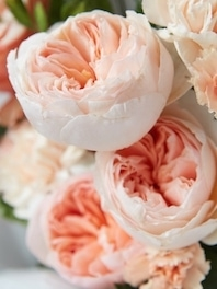 Peonies for Sale   Peony Flowers for Weddings   Flower Explosion Peonies  May   June   July 15th