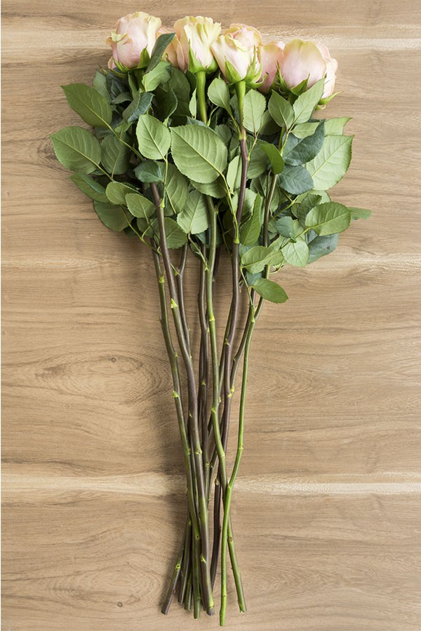 Baby Succulents Bulk