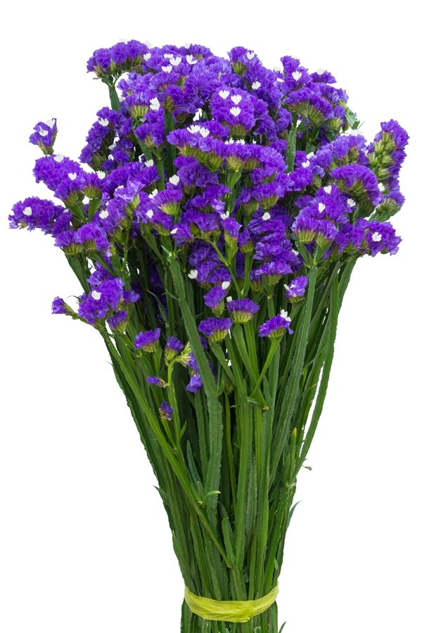 Statice for sale   Statice flowers   Flower Explosion Purple Statice