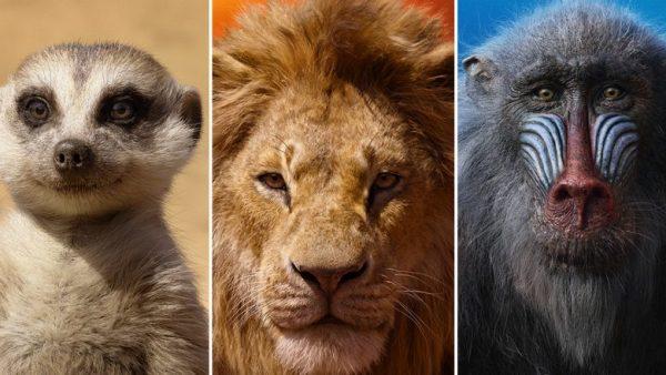 lion king # 29