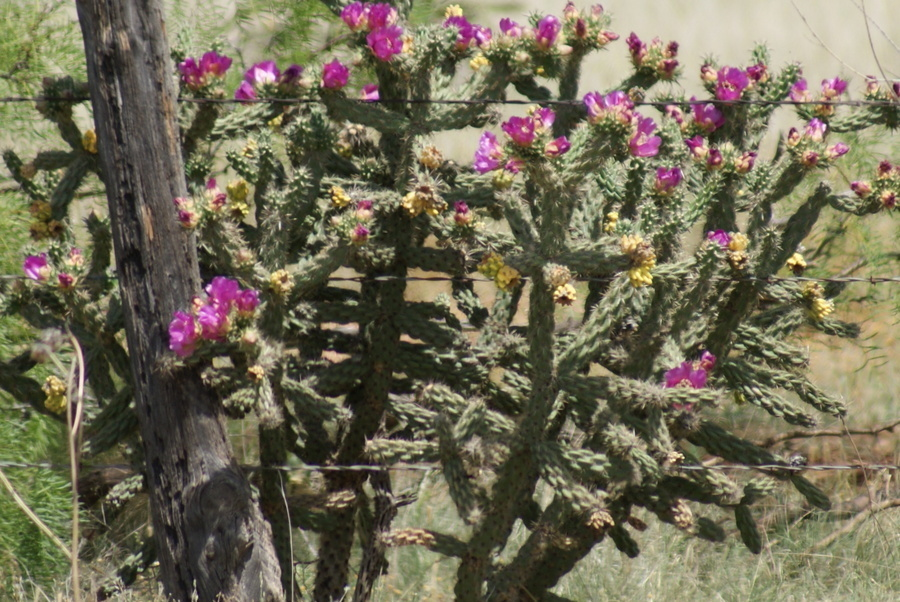 Texas There Are Cactus
