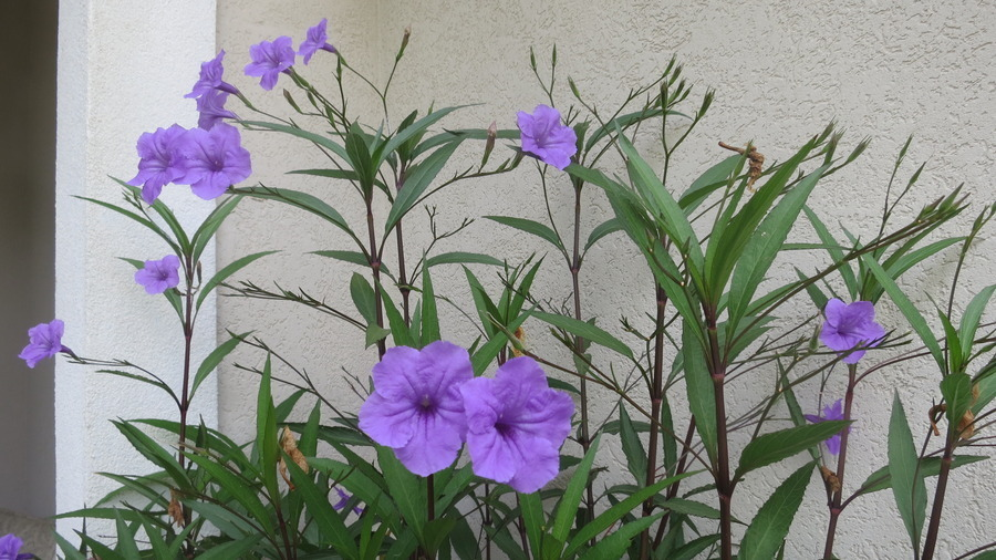 Tall Stalk Purple Flowers