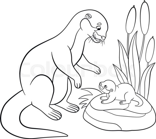 otter coloring page # 9