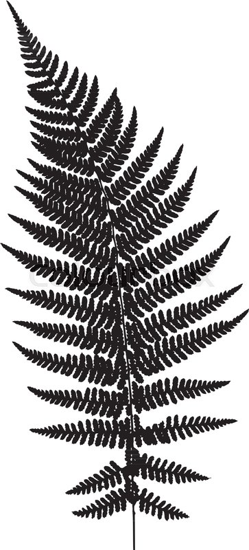 Fern Leaf Silhouette Vector Stock Vector Colourbox
