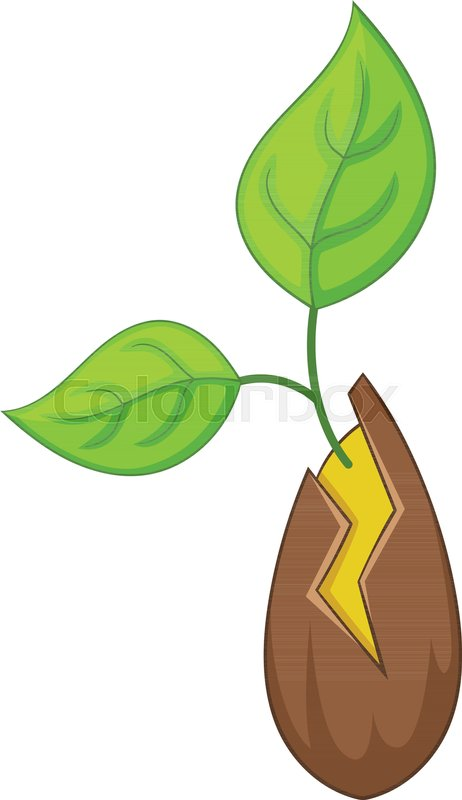 Seed Sprouting Icon Cartoon Stock Vector Colourbox