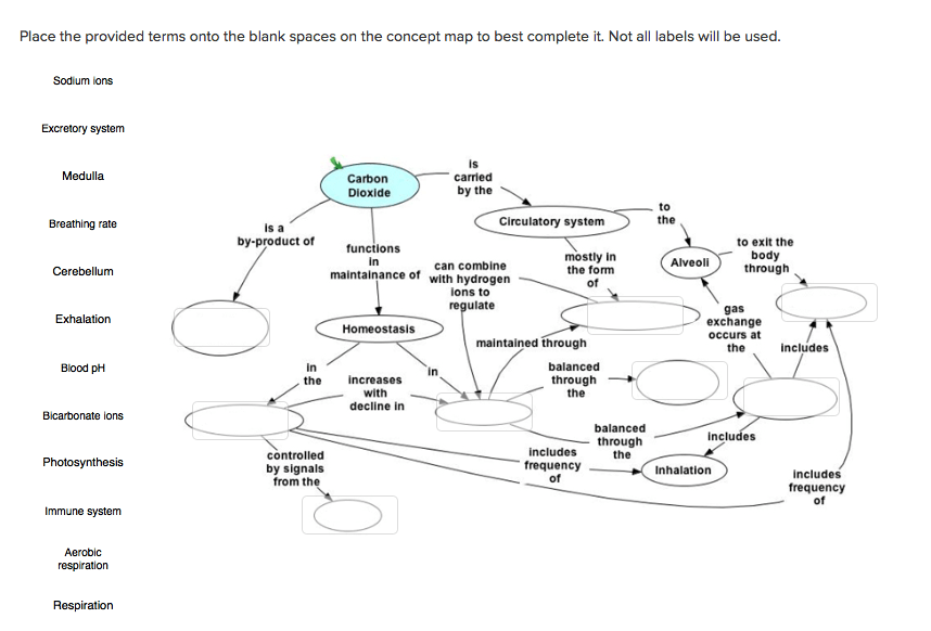 Concept Map Answers Immune System