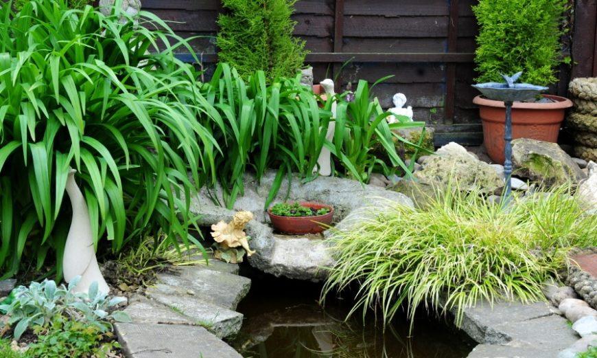 Plants Around Small Pond