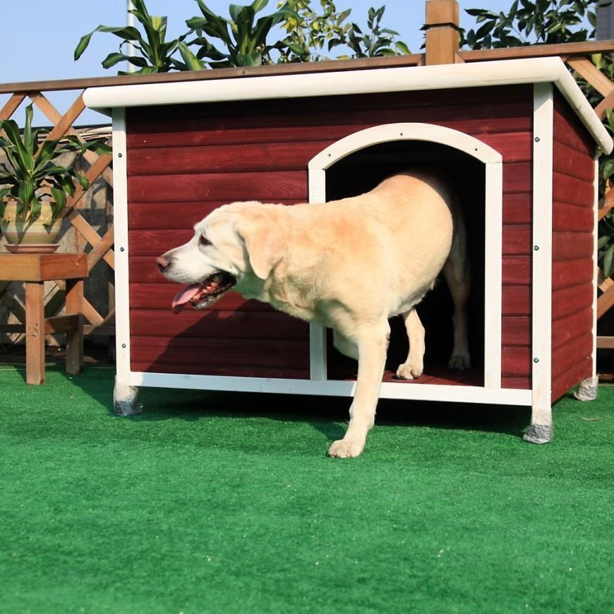 34 Doggone Good Backyard Dog House Ideas
