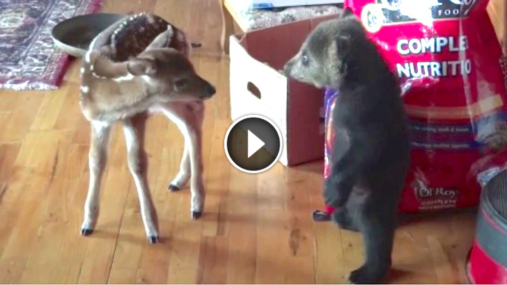 Little Bear Cub Cant Stop Flirting with his New Best ...