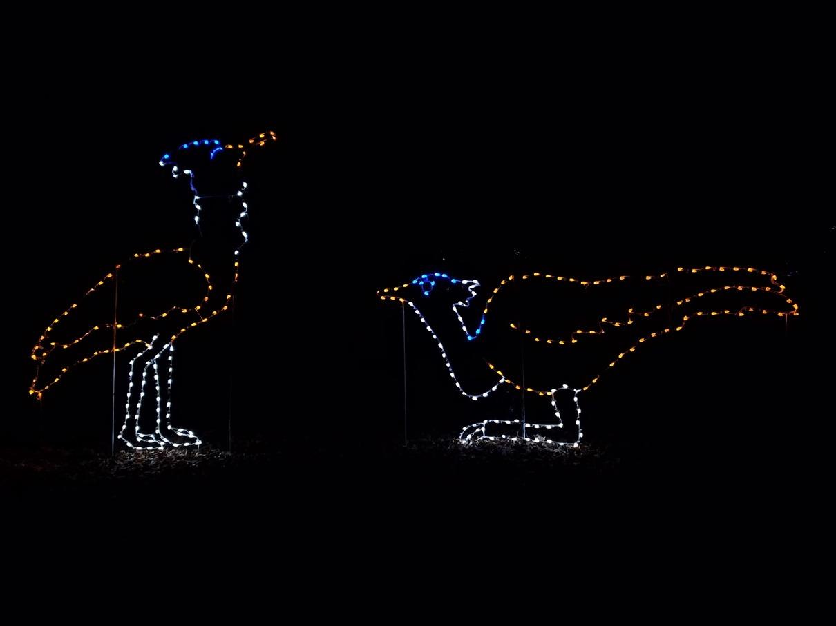 Zoo Lights Parking Dc