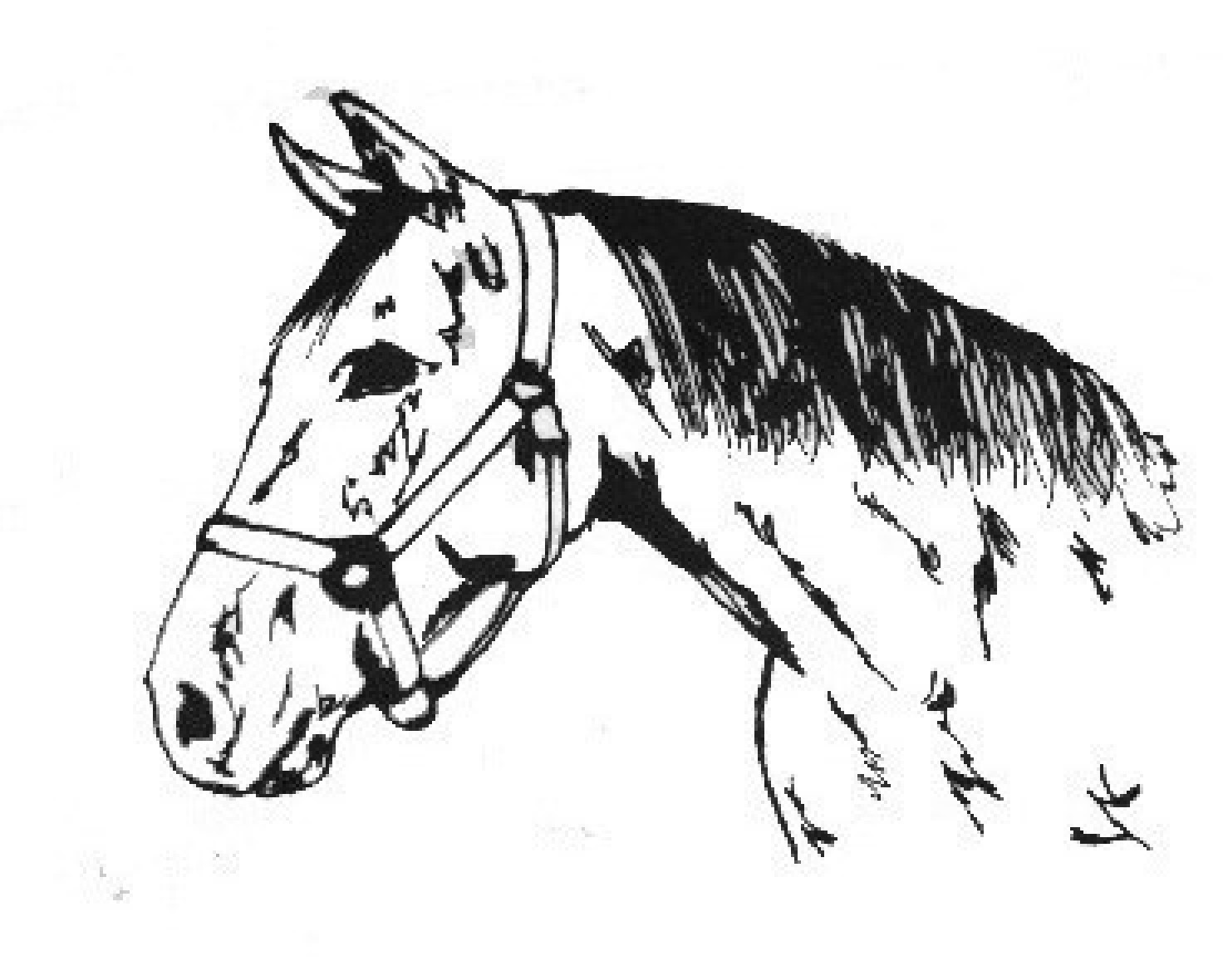 Quarter Horse Coloring Pages