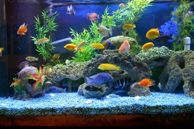 Aquatic Plants Sale Bangalore