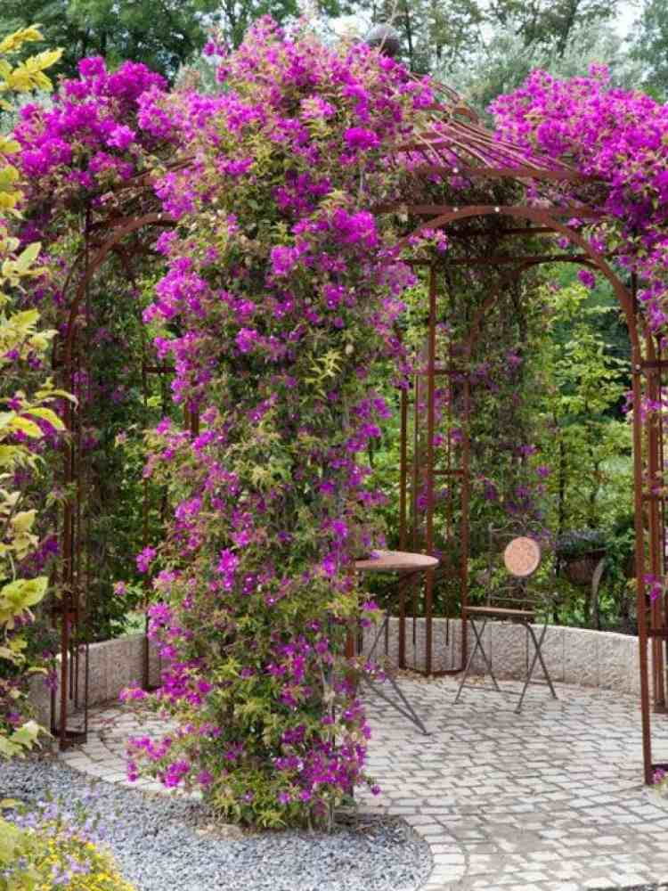 D 233 Co De Jardin Enjolivez Kiosque Et Pergola Avec Des Fleurs