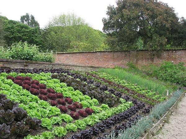 Garden Beds Raised Diy Plan