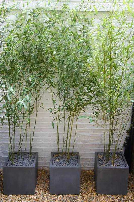Tall Outdoor Planters Sale