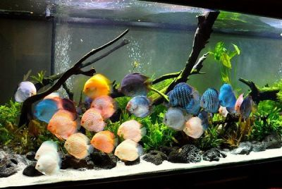 How to choose freshwater aquascaping fish species ...