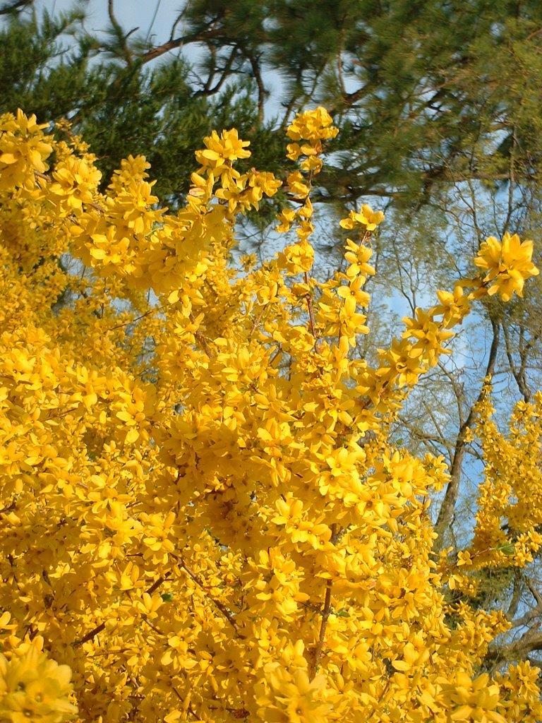 Flowering Trees Blog Deb Mills