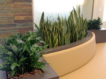 Commercial Plant Service in San Diego  CA Greenleaf Interior Plants Solutions offers a vast selection of indoor plants  that can help you with your Interior Plant Design  They are a great outlet  to