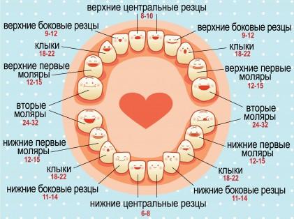Schemat ząbkowania zębów mlecznych