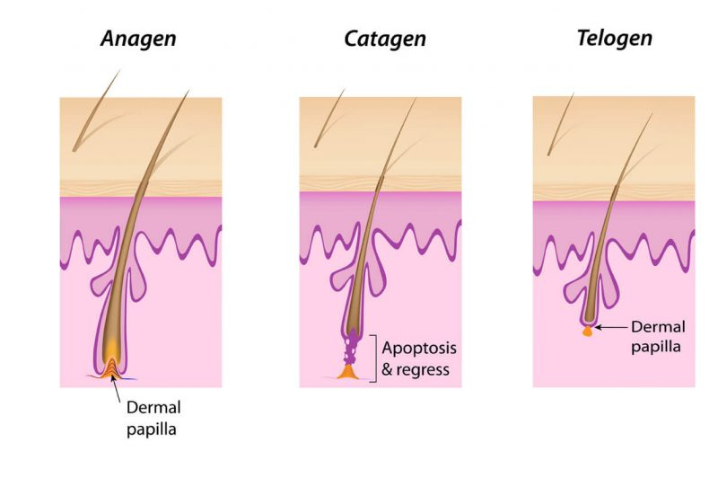 Anagen Phase Hair Growth