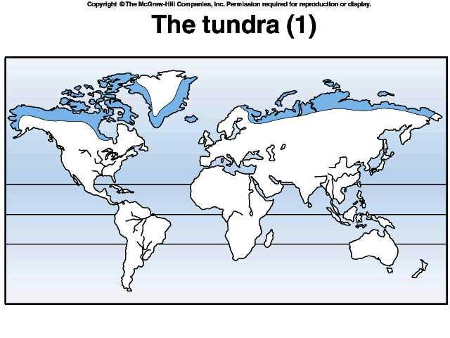 Tundra Biome Map Arctic World