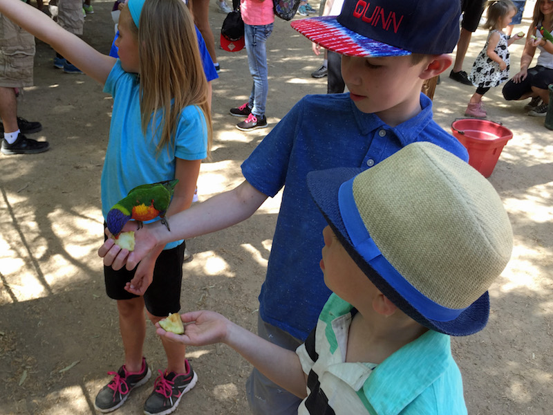 Wildlife World Zoo - things to do with kids in Phoenix
