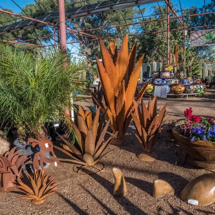 Arizona Shrubs And Vines