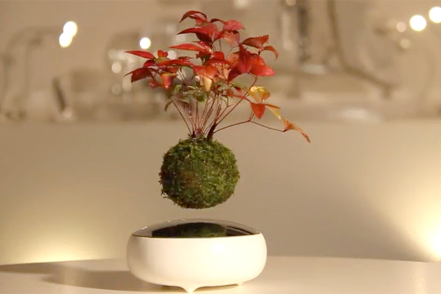 Kickstarter Air Bonsai