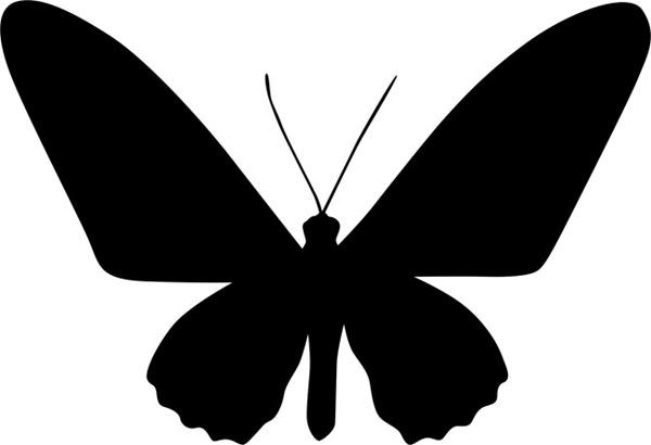 Classic Butterfly