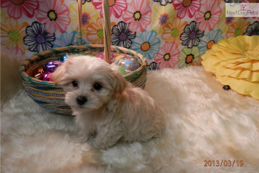 Puppies Mix Breed Free