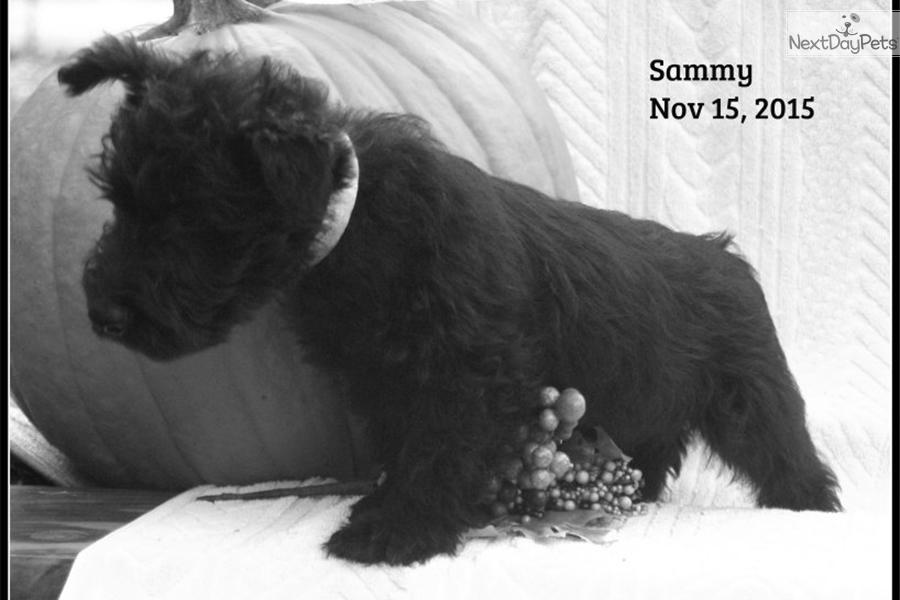 Puppy Vaccination Schedule Akc