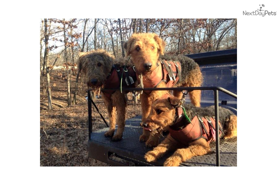 Litter Mill Puppies Puppy