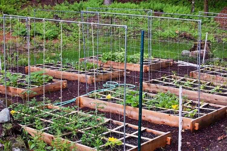 Raised Vegetable Garden Frames
