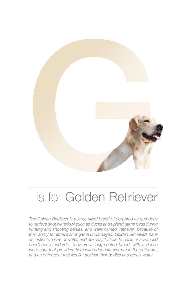 Designer Creates Adorable Alphabetical Series Of Dog