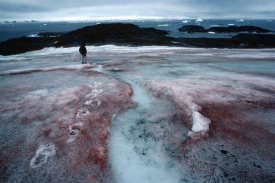 Biogeography of Antarctica - Discovering Antarctica