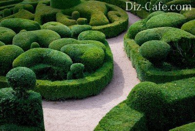 Doming topiary
