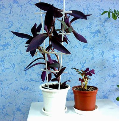 Transplanting av planter med transshipperingsmetode