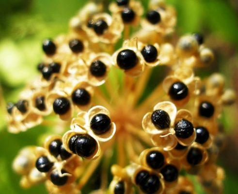 Cerema är användbar på grund av innehållet av vitaminer, mineraler, organiska syror och eteriska oljor. Lista det viktigaste.