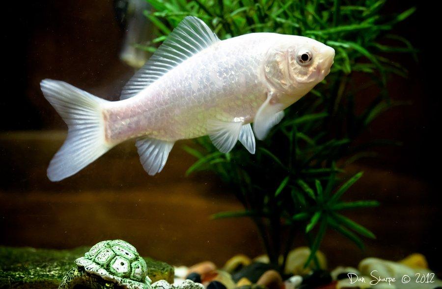 Aquarium Plants Sale Online